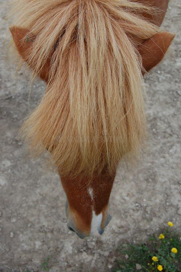 Coups de cheval image libre de droits