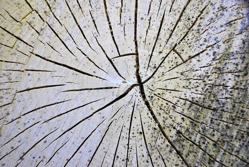 Coupure d'arbre image stock