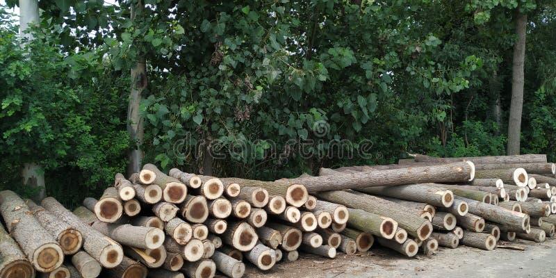 Coupure de l'arbre sur le déboisement de la terre photos libres de droits