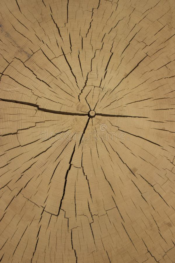 Coupure du bois antique images stock