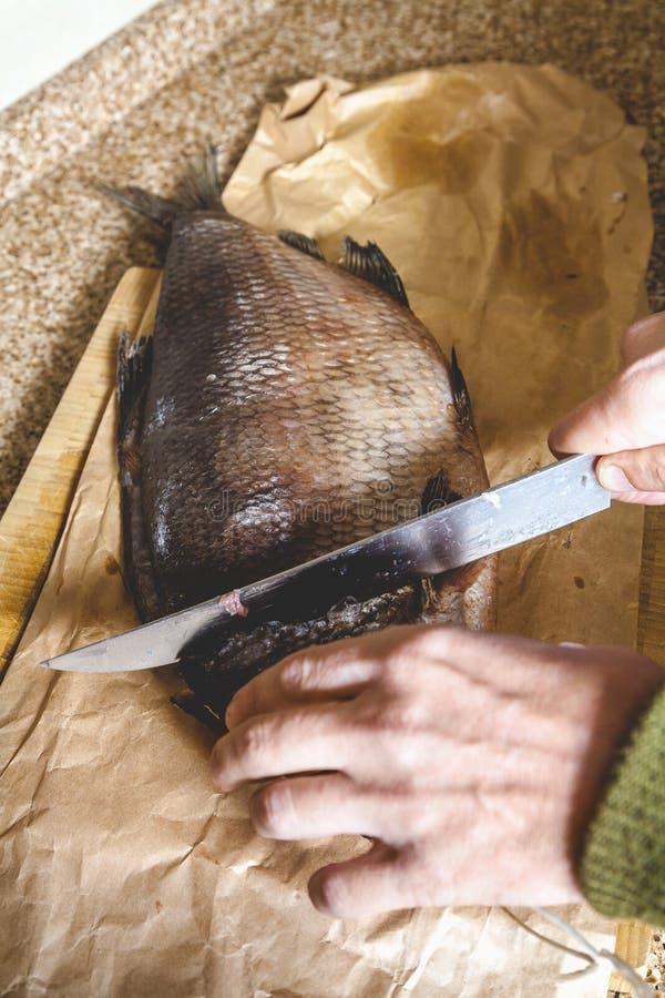 Coupure du grand plan rapproché lent de poissons photo libre de droits