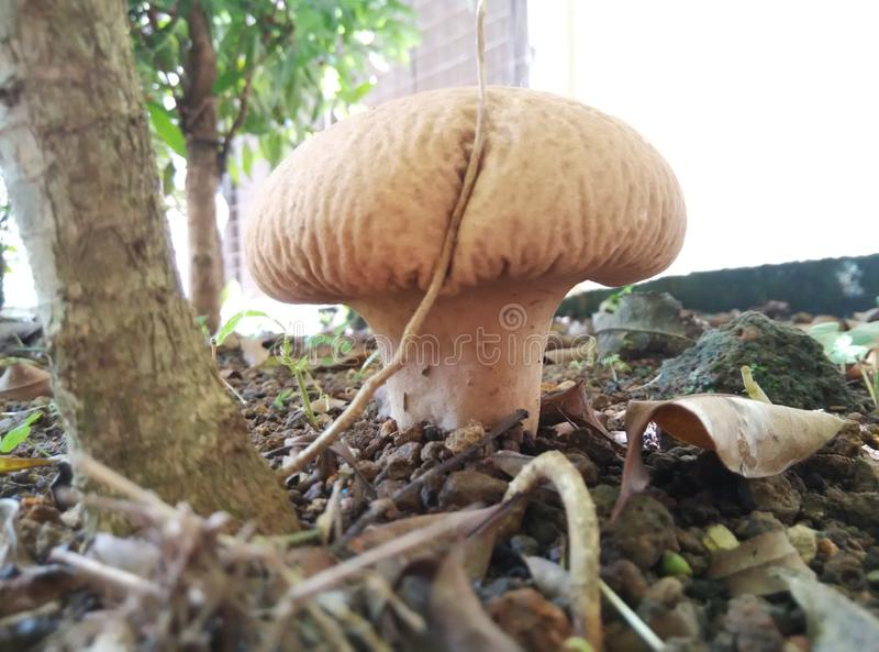 Cour croissante sauvage de champignon photographie stock libre de droits
