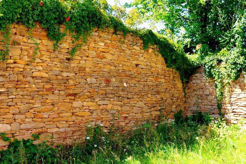 Cour de l'église saxonne médiévale enrichie dans Rodbav-Rohrbach, le comté de Sibiu, la Transylvanie ruines image libre de droits