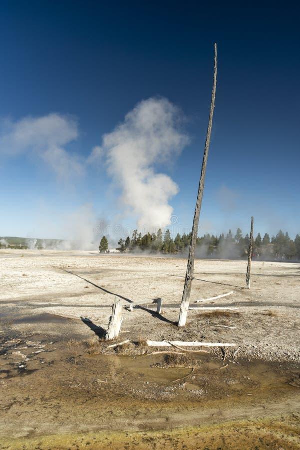 Courant chaud et arbres pétrifiés, parc national de Yellowstone de pot de peinture de fontaine image stock