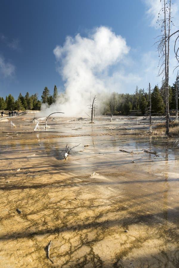 Courant chaud et arbres pétrifiés, parc national de Yellowstone de pot de peinture de fontaine photo libre de droits