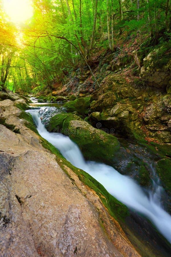 Courant d'écoulement de l'eau dans la forêt de montagne images stock