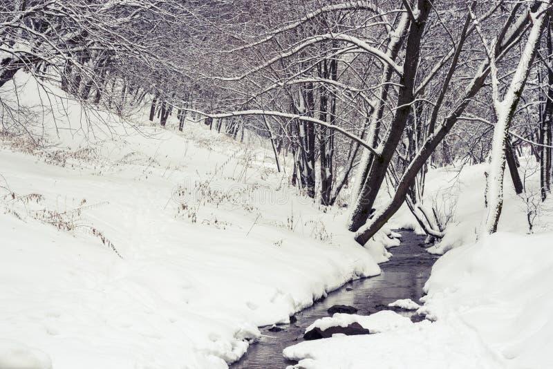 Courant dans la forêt d'hiver photo stock