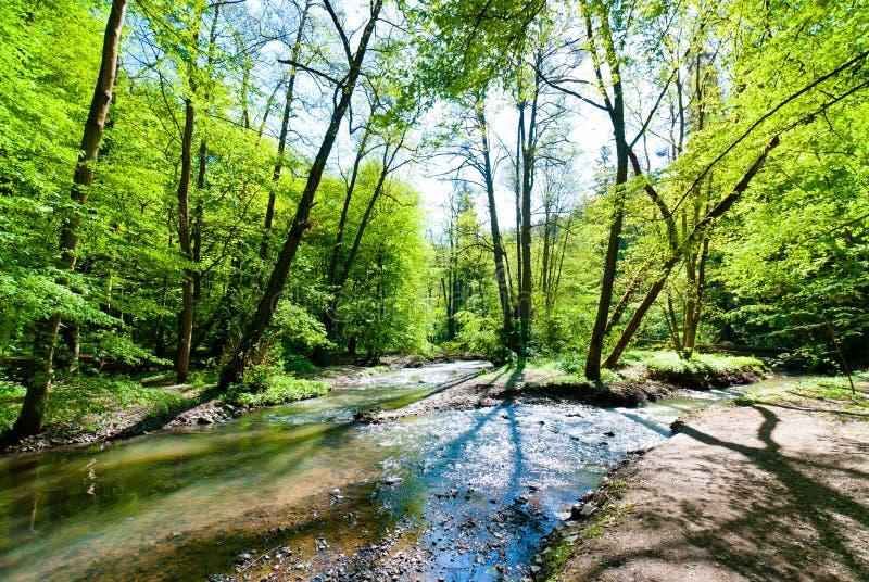 Courant dans une forêt images libres de droits