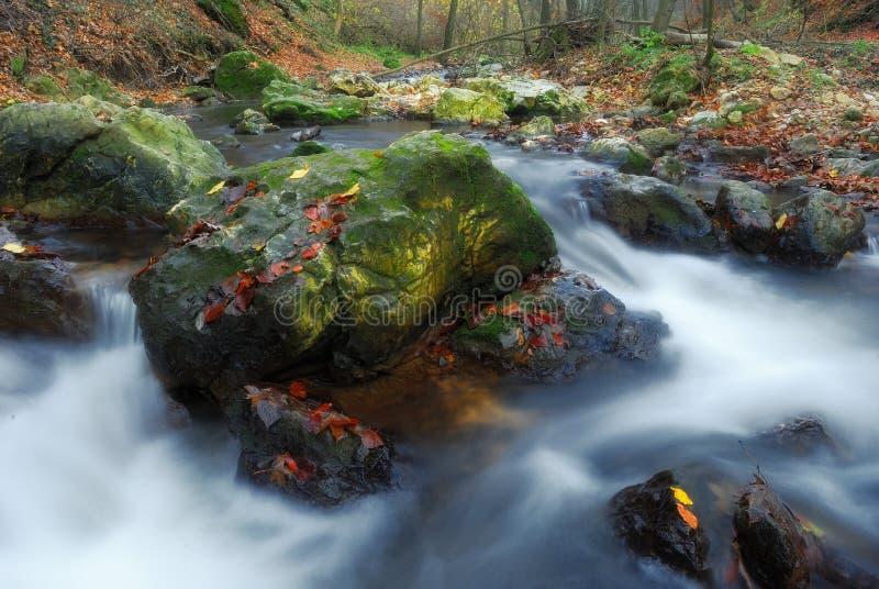 Courant de forêt d'automne images libres de droits