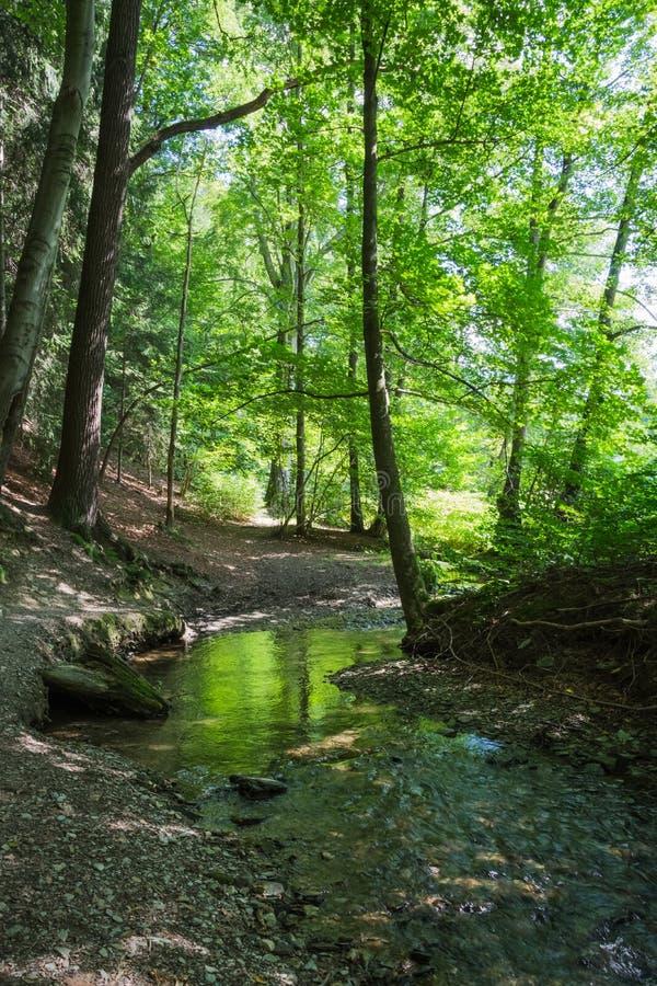 Download Courant de forêt en été photo stock. Image du calme, campagne - 76077880