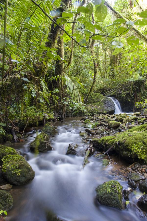 Courant de for?t de nuage, Costa Rica image libre de droits