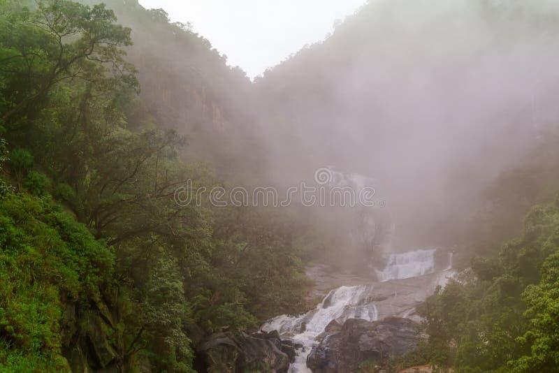 Courant de montagne dans la forêt image stock