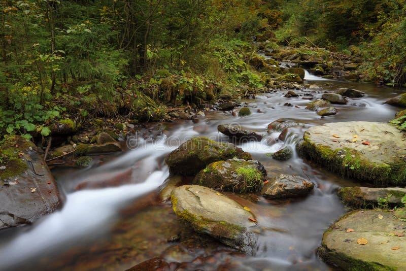 Courant de montagne dans une forêt à la saison d'automne photo libre de droits