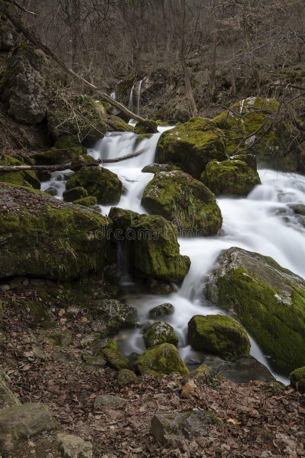 Courant de montagne par la forêt images libres de droits