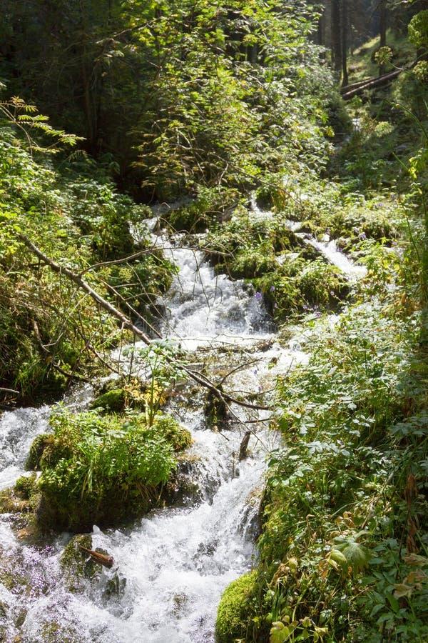 Download Courant De Montagne Par Les Arbres Image stock - Image du fleuve, woodland: 77150635