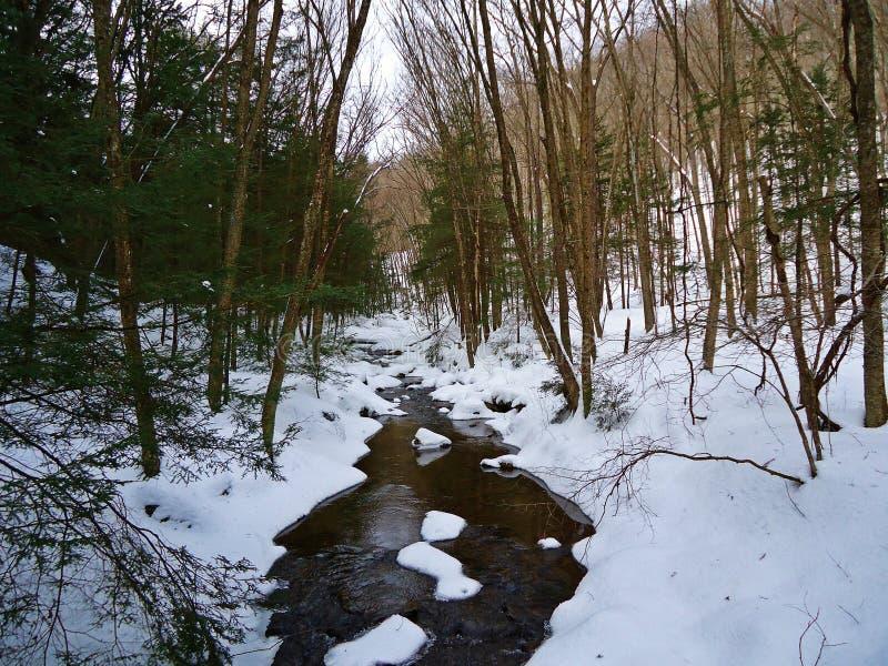 Courant de truite d'hiver images stock