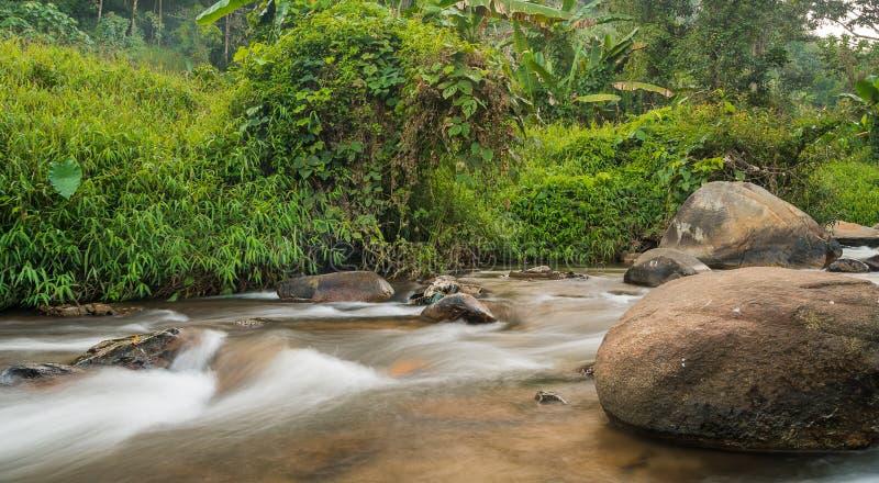 Courant et grandes pierres dans la forêt photo libre de droits