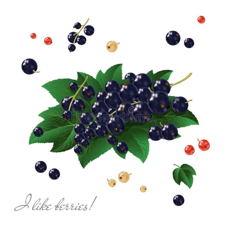 Courant noir Belles baies et feuilles brillantes La composition des baies brillantes noires illustration de vecteur