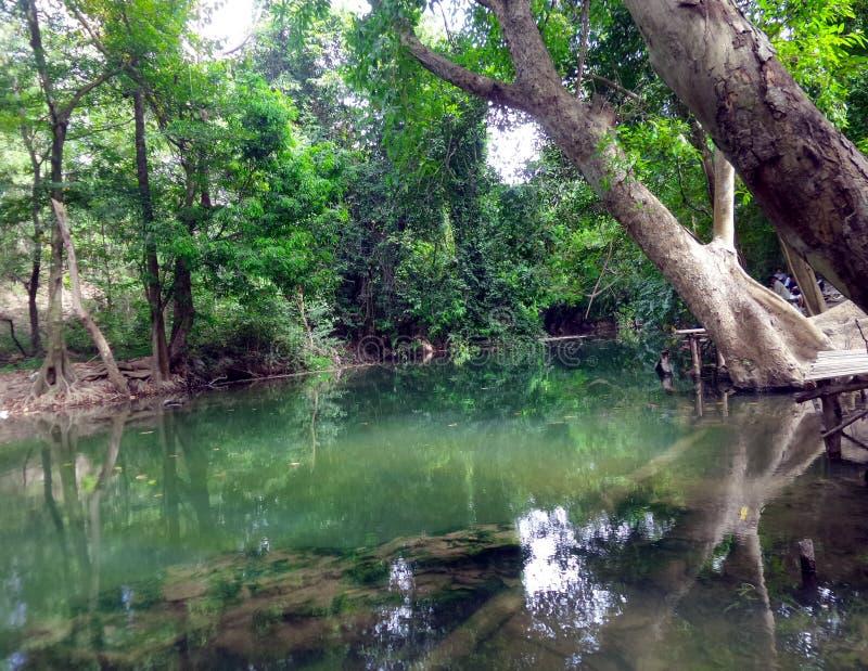 Courant paisible le long de la forêt verte image stock