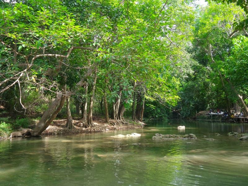 Courant paisible le long de la forêt verte photos stock