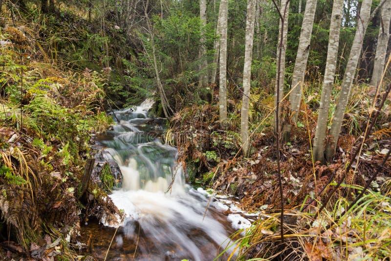 Courant rapide dans la forêt photo stock