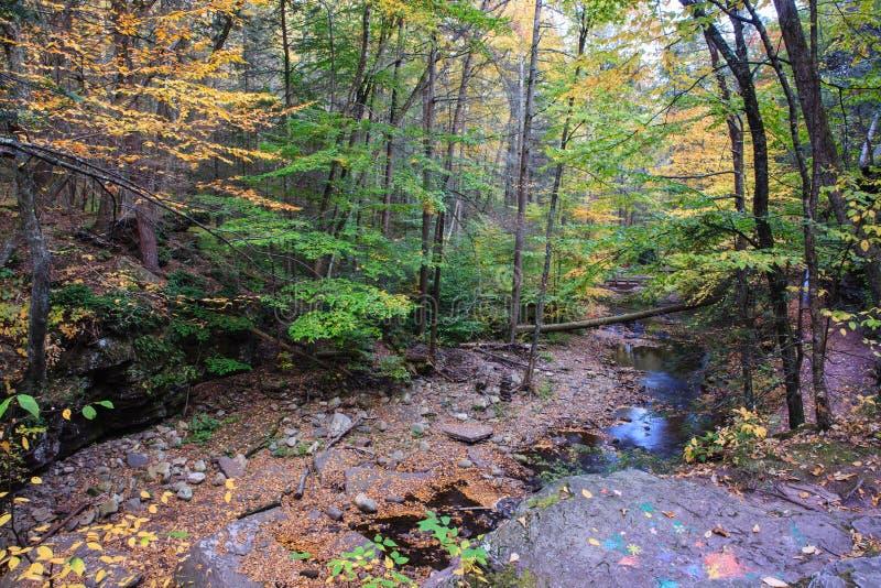 Courant Ricketts Glen Pennsylvania de montagne images libres de droits