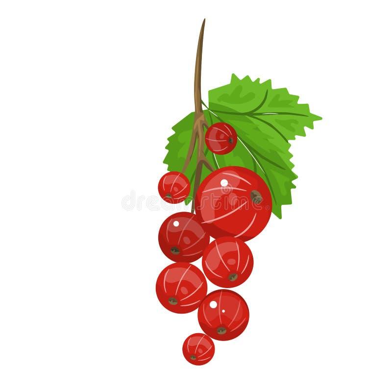 Courant rouge L'illustration réaliste de vecteur des baies et du vert part sur le fond blanc illustration de vecteur