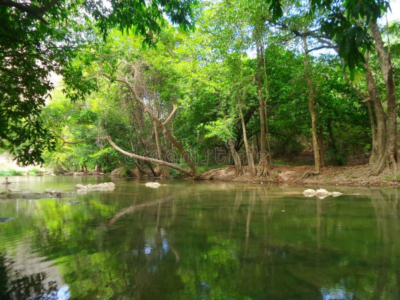 Courant tranquille le long de la forêt verte images stock