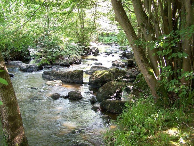 Courant, une petite rivière de montagne au milieu de la forêt photographie stock libre de droits