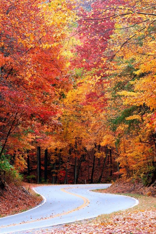 Courbe de l'automne S photo libre de droits