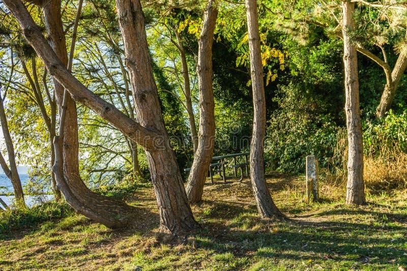 Courber la scène d'arbres photos libres de droits