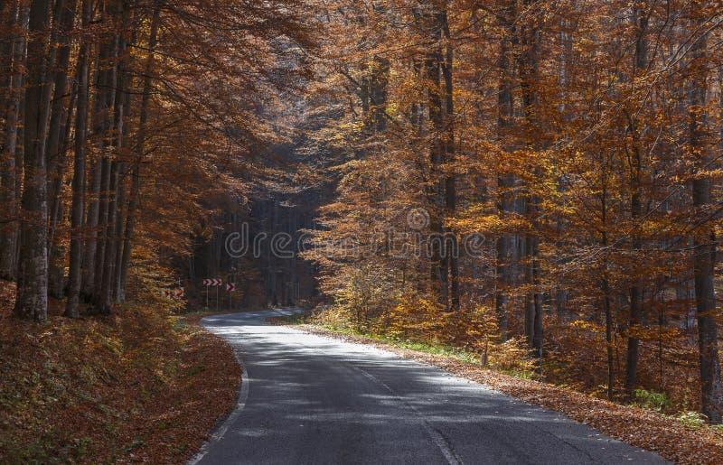 Courbes d'une route d'enroulement par des arbres d'automne en montagnes carpathiennes photographie stock libre de droits