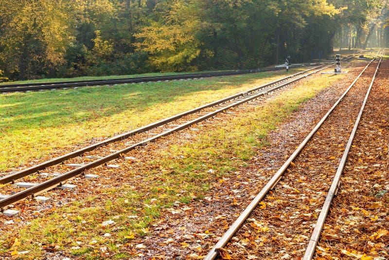 Courbes ferroviaires allant par le fond chaud de voyage de chute de belle forêt orange Concept saisonnier de voyage photo stock