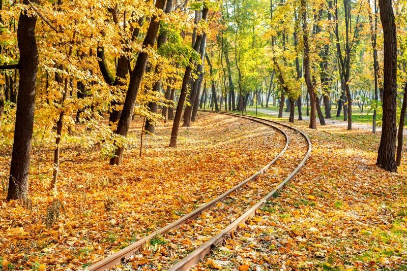 Courbes ferroviaires allant par le fond chaud de voyage de chute de belle for?t orange Concept saisonnier de voyage photographie stock libre de droits
