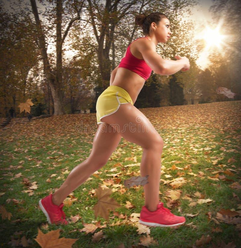 Courez en automne photos libres de droits