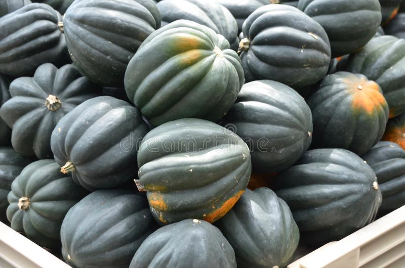 Courge de gland photos stock