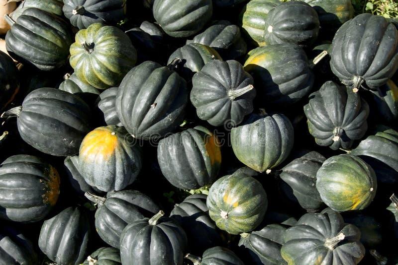Courge de gland organique fraîche au marché d'agriculteurs images stock