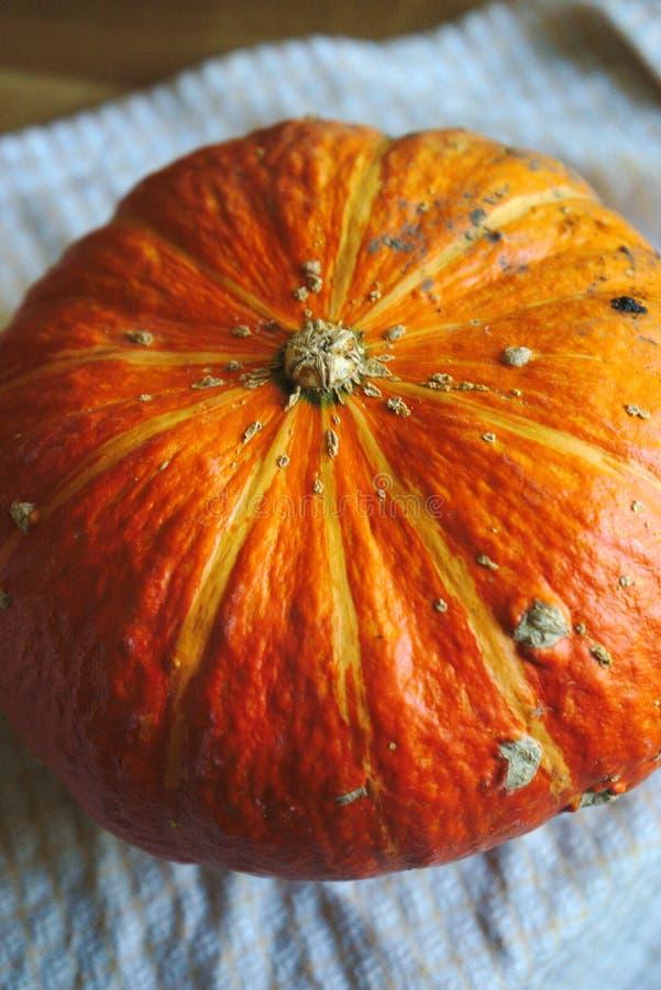 Courge orange biologique de jardin image libre de droits