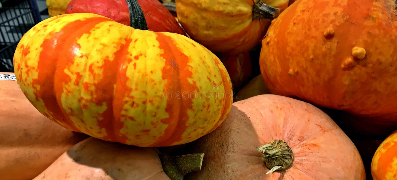 Courges, variété, couleurs d'automne, thanksgiving photos libres de droits