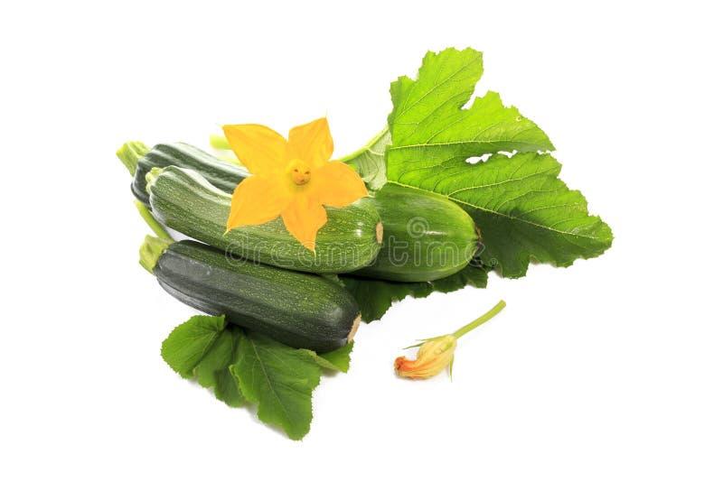 Courgette of groene pompoen met groene geïsoleerde bladeren en bloemen stock foto's