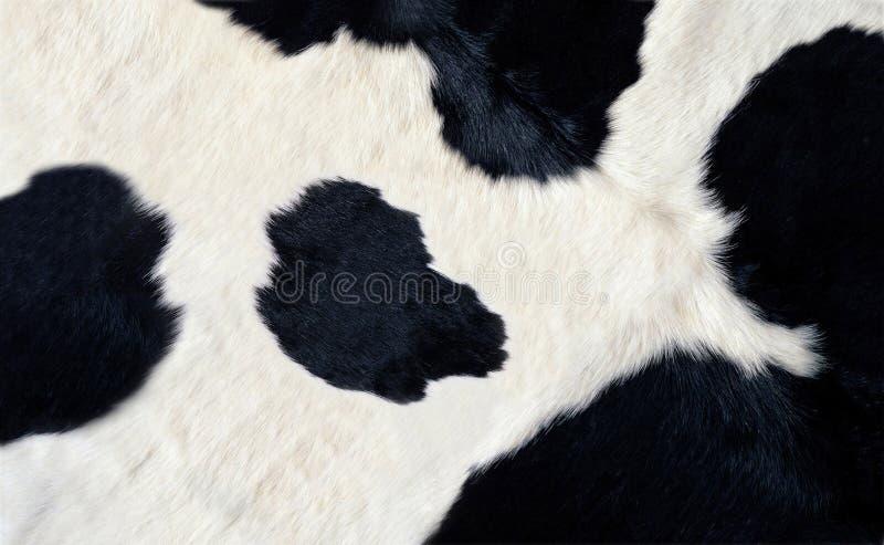 Couro cru preto e branco real da vaca fotografia de stock