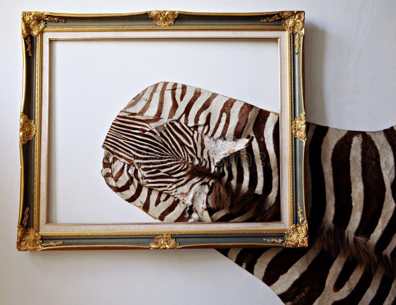 Couro da zebra imagem de stock royalty free