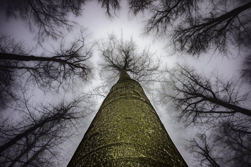 Couronne d'arbre de ressort photos stock