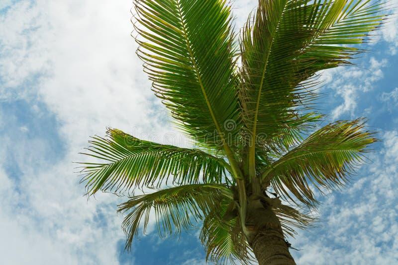 Couronne d'un palmier de dessous images stock