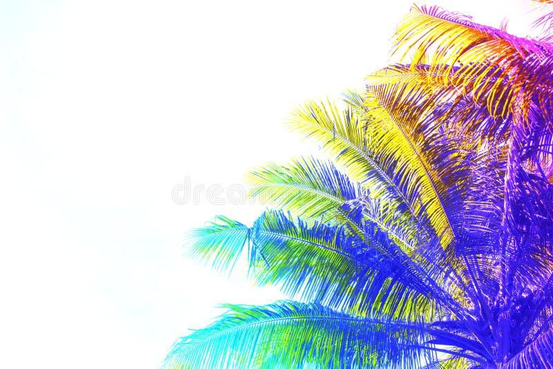 Couronne de palmier colorée par arc-en-ciel sur le fond de ciel Photo modifiée la tonalité fantastique avec le palmier de Cocos s image libre de droits