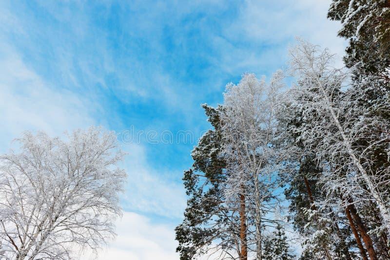 Couronne des arbres dans la forêt avec le ciel photographie stock