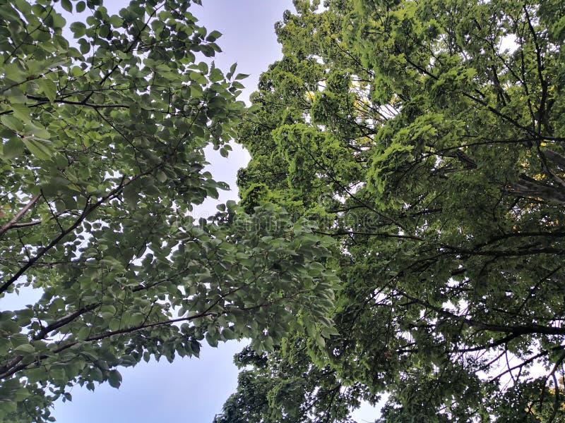 Couronne des arbres image libre de droits