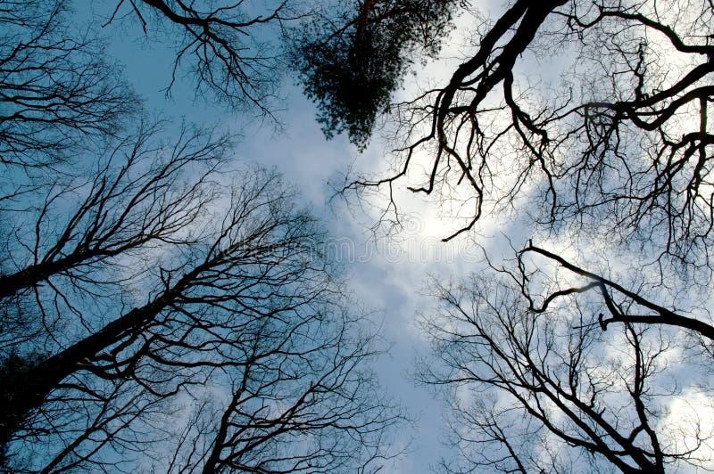 Couronnes d'arbre images stock