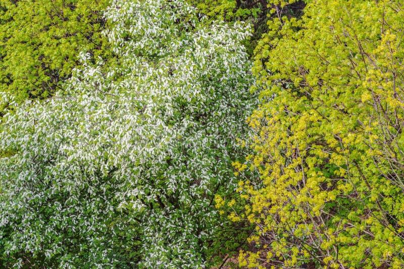 Couronnes d'arbre dans la forêt photographie stock libre de droits