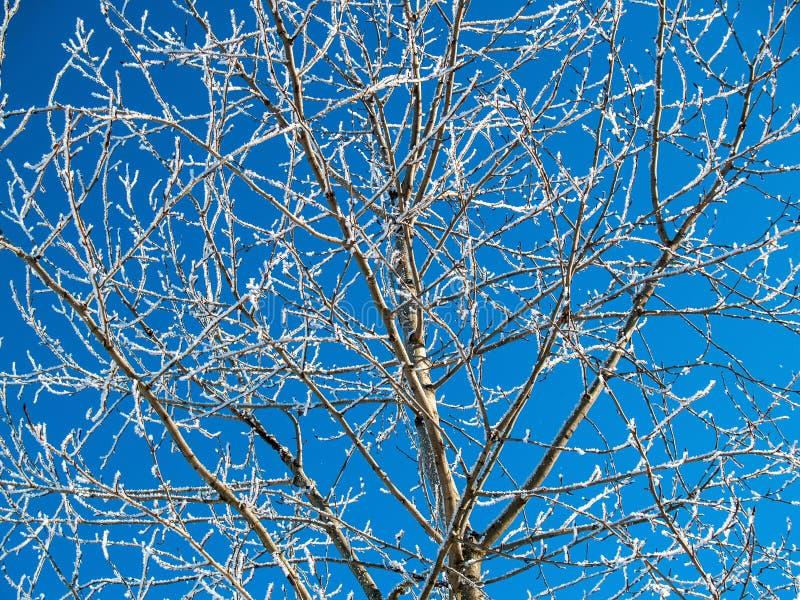 Couronnes des arbres dans les cristaux blancs de neige contre un ciel bleu dans la victoire photographie stock